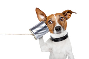 bigstock-Dog-On-The-Phone-44086108