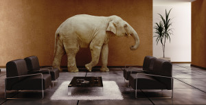bigstock-Elephant-Indoor-8059871