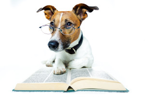 dog-and-books-33514622